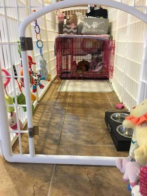puppy care playpen