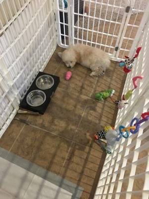 puppy playpen, puppy care